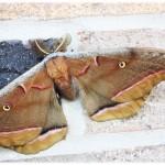 Gorgeous Moths
