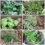 Spring Flowers & Herb Planting