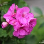 Flower Power Yard Tour {Spring 2014}