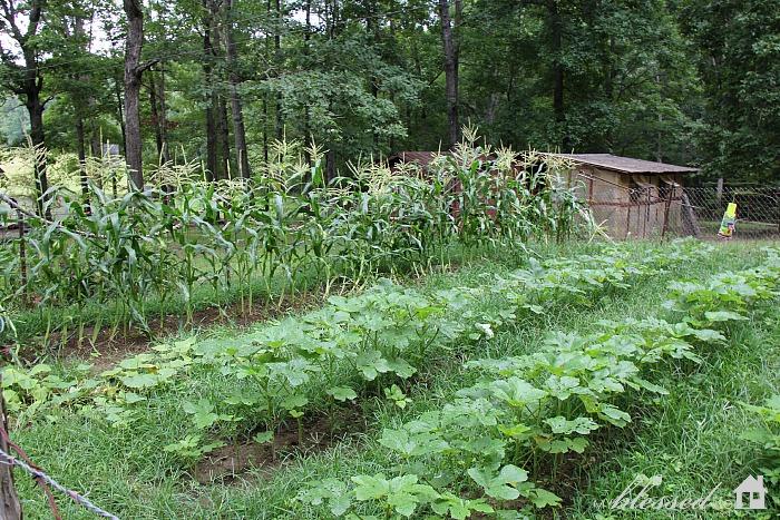 Summer Gardening | MyBlessedLife.net